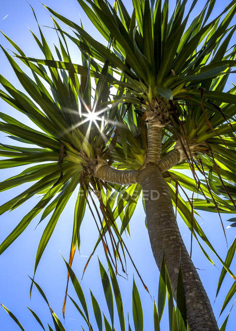 Low angle view of a Palm tree — Stock Photo