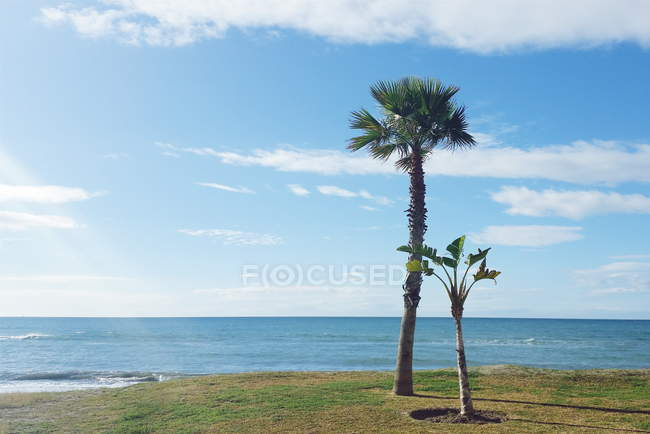 Vista panorámica de dos palmeras en la playa, Málaga, Andalucía, España - foto de stock