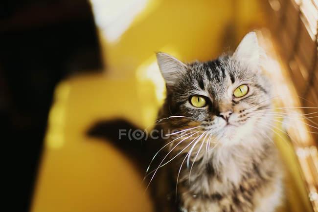 Cat sitting on window sill in sunlight — Stock Photo