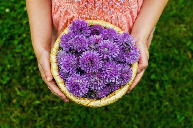 Overhead view of girl holding basket of purple chive blossoms — Stock Photo