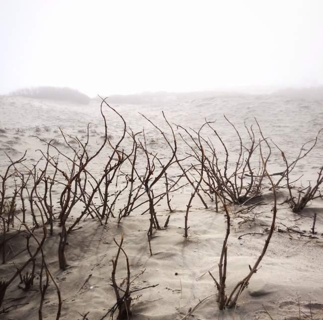 Vista panorámica de las plantas que crecen en la arena - foto de stock