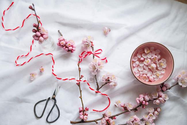 Вид сверху цветы сакуры, поток и ножницы — стоковое фото