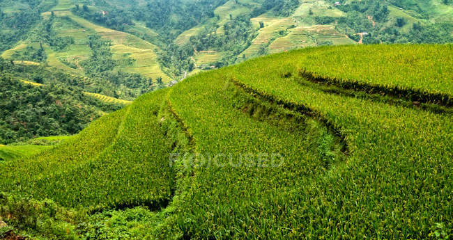 Scenic view of rice terraces, Hoang Lien national park,  Sapa, Vietnam — Stock Photo