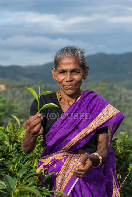 Raccoglitore di tè femminile con foglie di tè appena raccolte, Sri Lanka — Foto stock