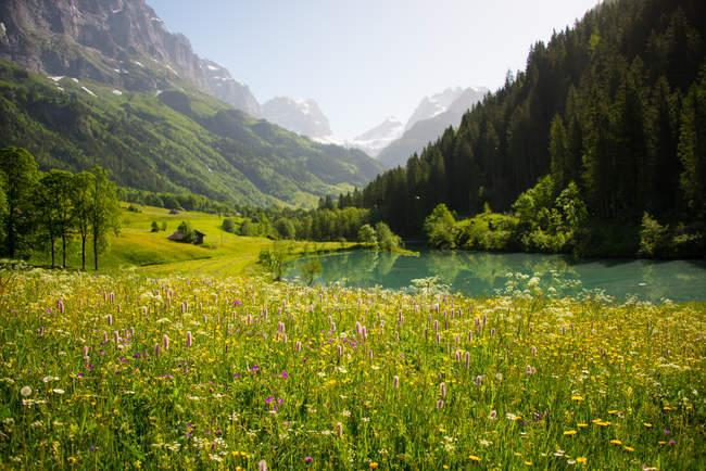 Beau paysage rural verdoyant, Gadmen, Berne, Suisse — Photo de stock