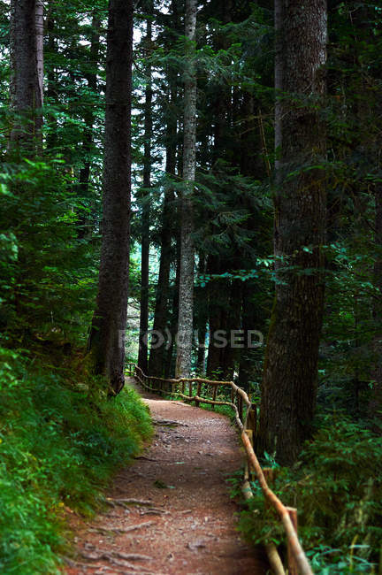 Scenic view of woodland trail in forest — Stock Photo