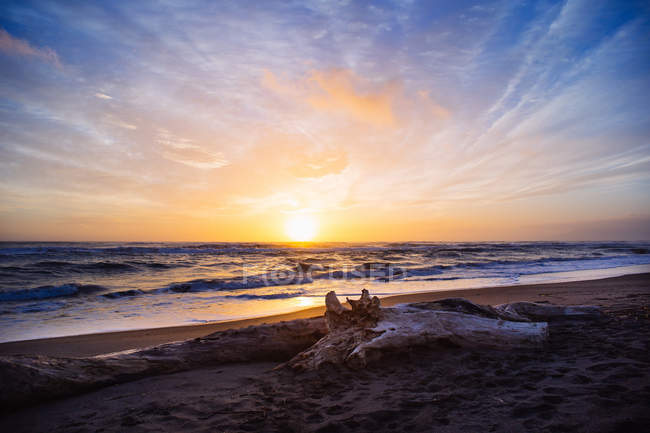 Scenic view of driftwood on the beach at sunset, Pescia Romana, Lazio, Italy — Stock Photo