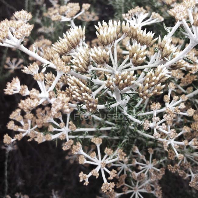 Close-up of growing dry coastal plant — стокове фото