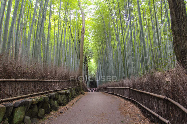 Vue panoramique du sentier à Kyoto, Japon — Photo de stock
