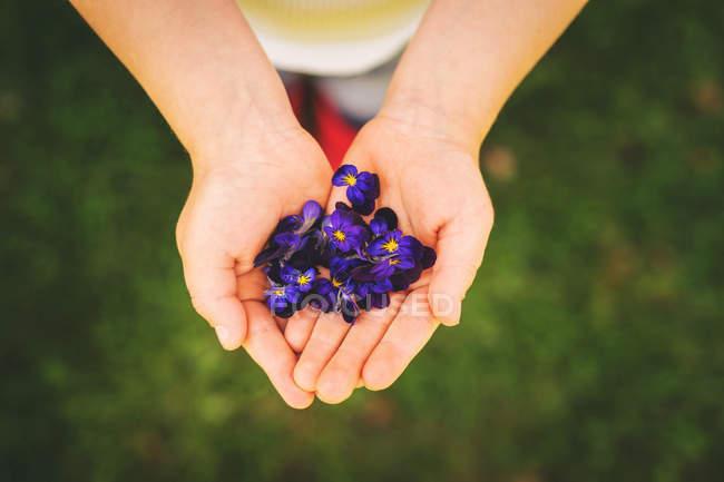 Крупным планом девушка Холдинг горсть фиолетовые цветы — стоковое фото