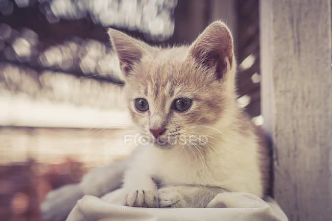 Закрыть симпатичного обожаемого котенка, размытый фон — стоковое фото