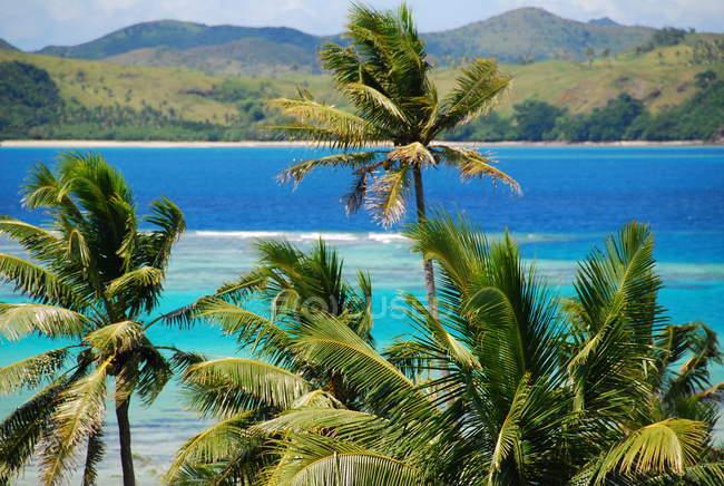 Isola tropicale con palme, Fiji — Foto stock