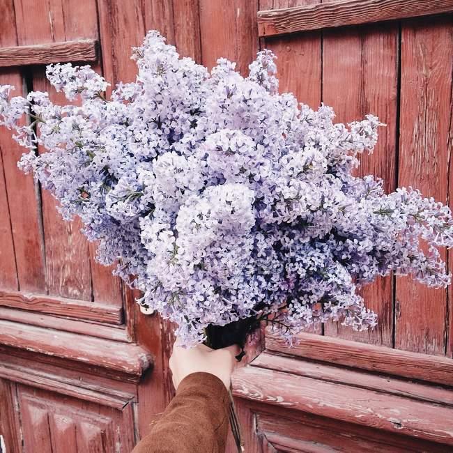 Женские руки, держащей Букет сирени цветки — стоковое фото