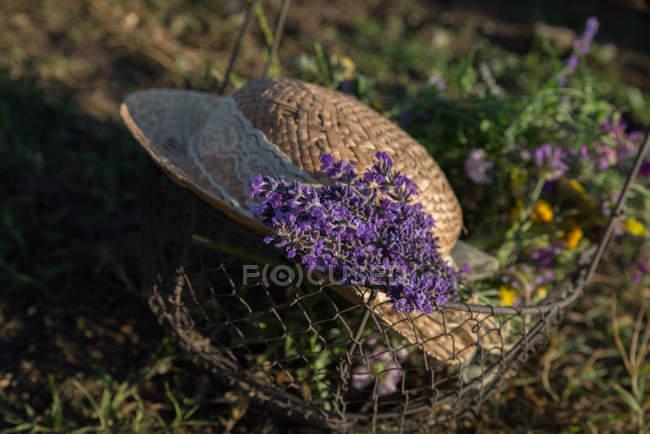 Живописный вид на соломенной шляпе, лаванды и полевые цветы в металлической корзине — стоковое фото