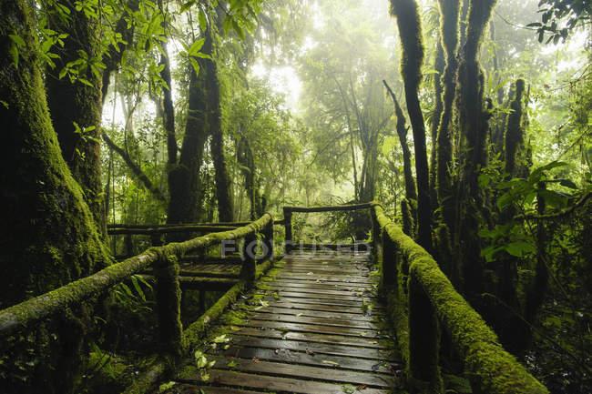 Ponte através do parque nacional Doi Inthanon, Chiang Mai, Tailândia — Fotografia de Stock