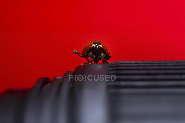 Gros plan de coccinelle sur la lentille de la caméra sur fond rouge — Photo de stock