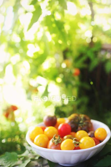 Cuenco de tomates frescos en la mesa en el jardín, fondo borroso - foto de stock