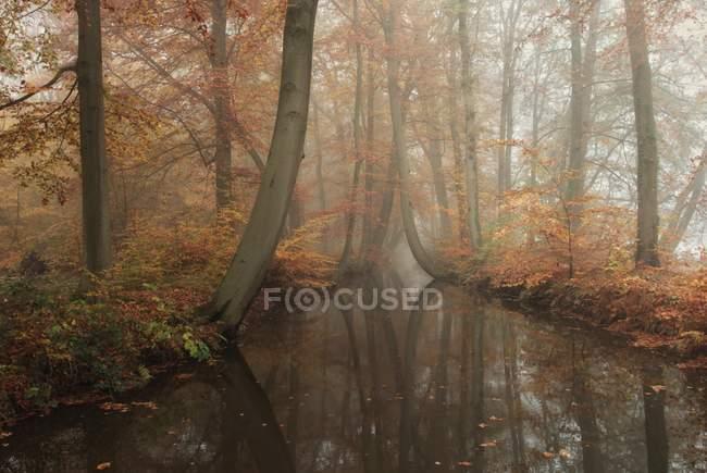 Vista panorámica del árbol forrado río a través de bosque de otoño, Holanda - foto de stock