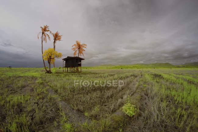 Malaysia, Borneo, Kota Kinabalu, Sangkir Village, veduta panoramica di piccola capanna in campo — Foto stock