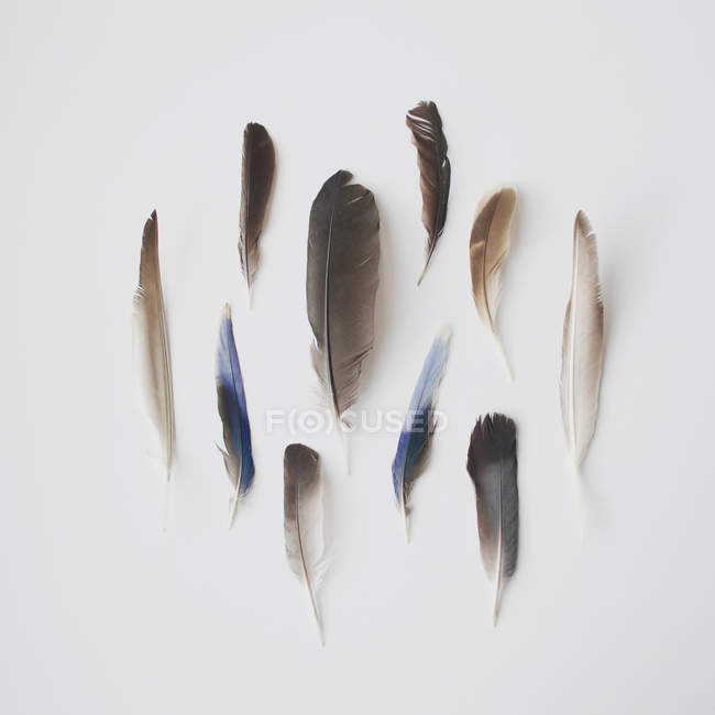 Top view of collection of bird feathers over white background — Stock Photo