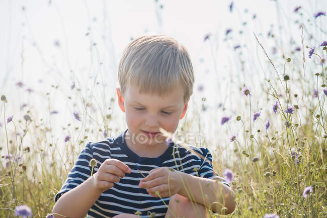 Портрет мальчика, сидящего в поле, играющего с полевыми цветами — стоковое фото