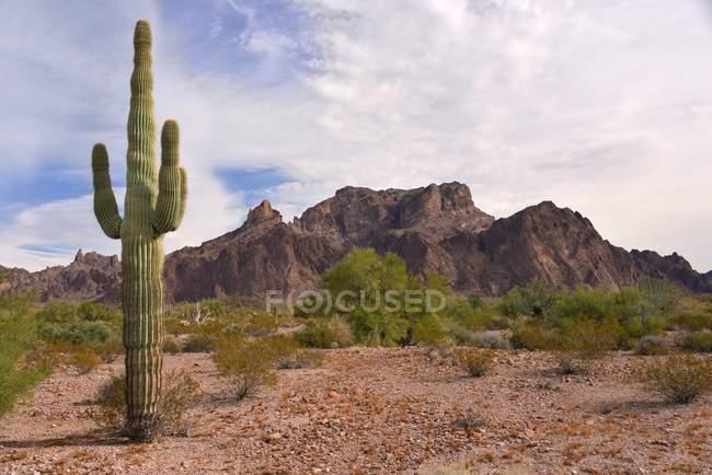 Vista panorâmica do cacto em frente ao pico do sinal, Arizona, EUA — Fotografia de Stock
