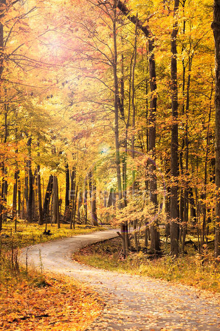 Тропинка в красивый осенний лес с опавшие листья — стоковое фото