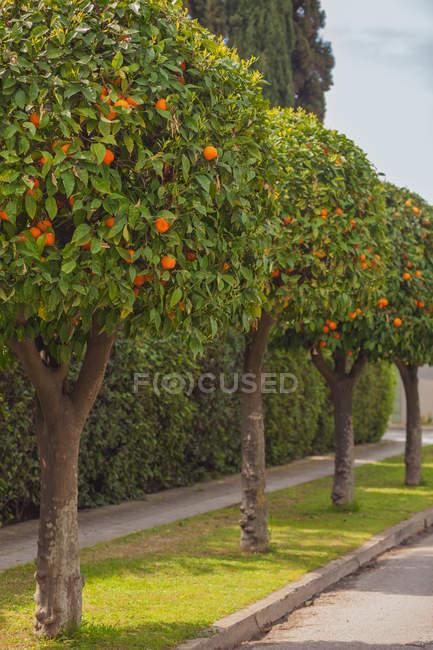 Живописный вид на деревья подряд на улице — стоковое фото