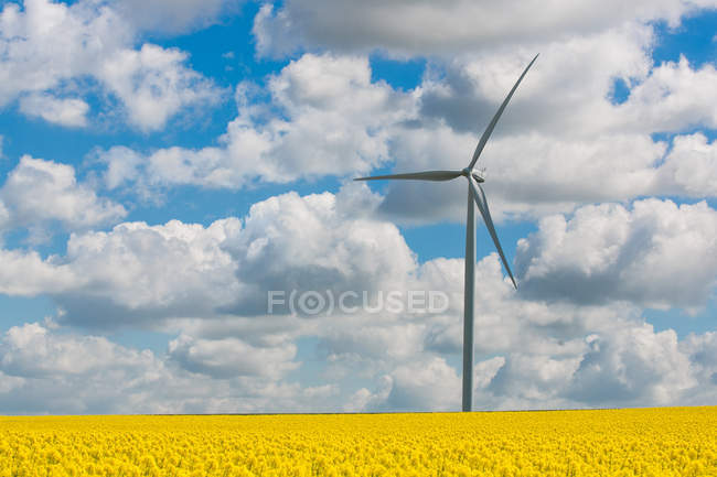 Scenic view of wind turbine in rapeseed field, Reims, France — Stock Photo