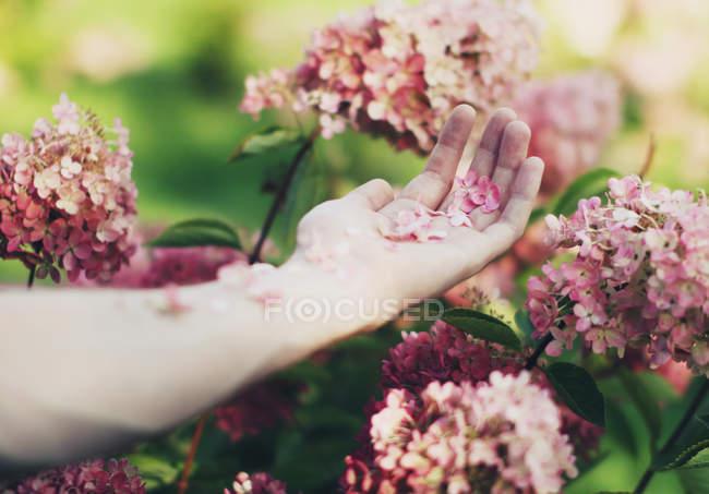 Close-up de mão feminina segurando as pétalas da flor — Fotografia de Stock