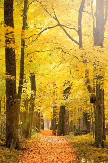 Vista panorámica del sendero en el bosque en otoño - foto de stock