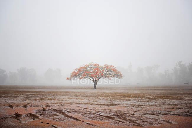 Vista panorámica del árbol de la llama, Parque Nacional Litchfield, Darwin, Australia - foto de stock