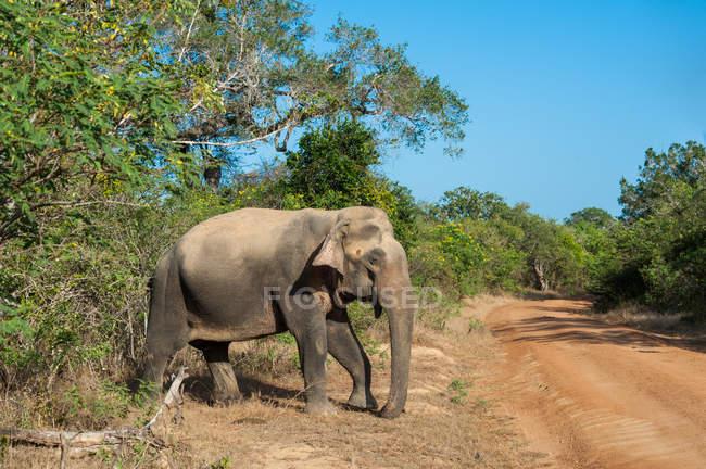 Schöne Elefantenwanderung in wilder Natur — Stockfoto