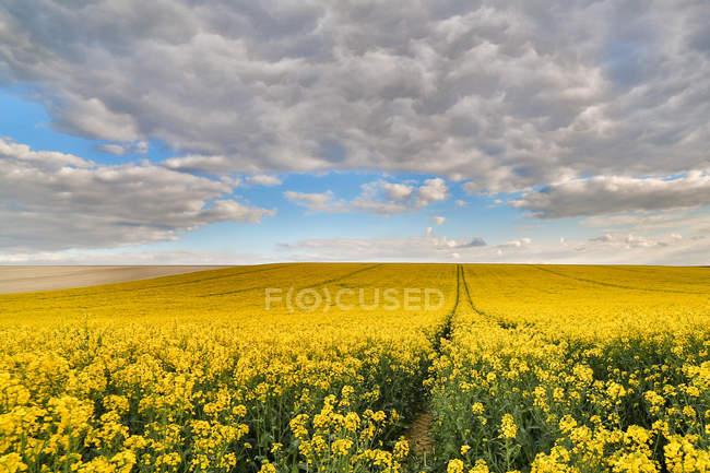 Vue panoramique sur le champ de colza, Reims, France — Photo de stock
