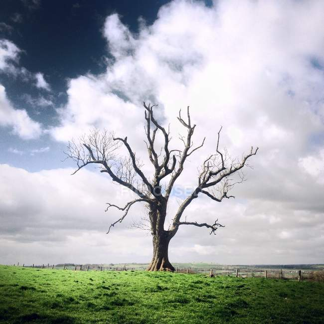 Single bare tree in field under cloudy sky — Stock Photo