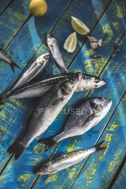 Сырой морской лещ, морской окунь, сардины и Скумбрия рыба на деревянном столе с лимоном и чесноком — стоковое фото