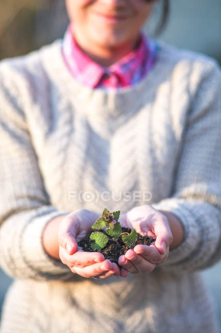 Close-up of Woman holding seedling in hands — Stock Photo