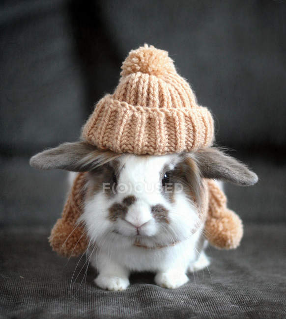 Adorable bunny pet wearing knit hat in autumn — Stock Photo