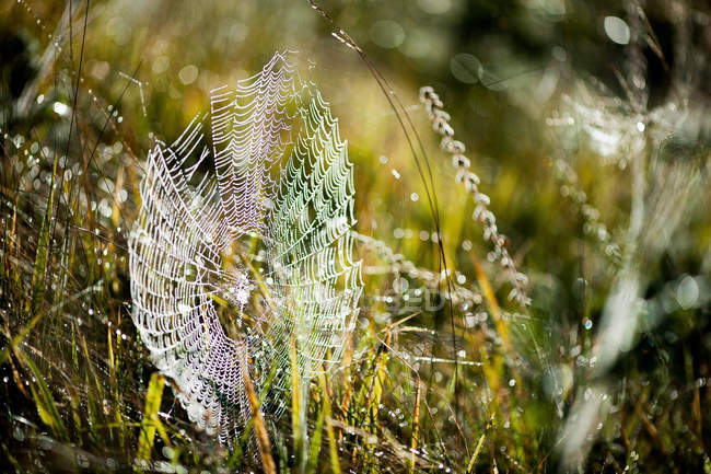 Close-up of spider web covered in morning dew — Stock Photo
