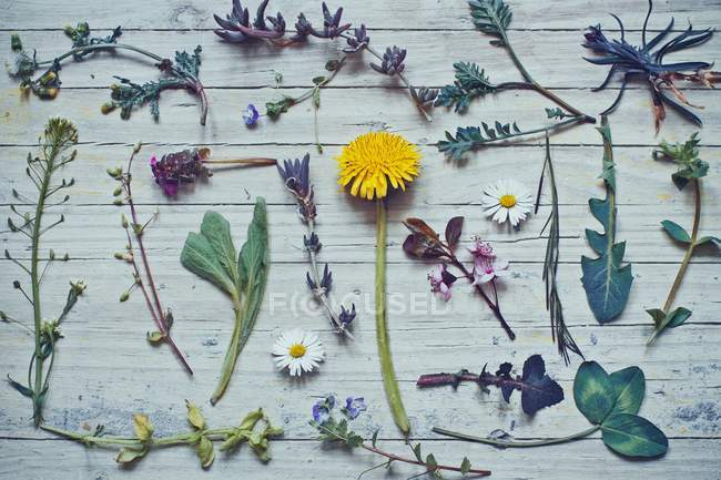 Collection of wild flowers on wooden table — Stock Photo