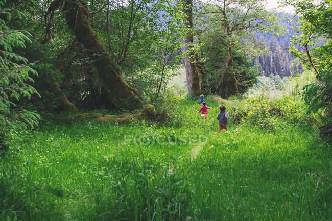 Drei Kinder rennen durch hohes Gras — Stockfoto