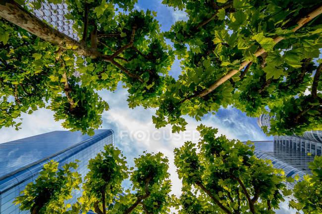 Низький кут зору хмарочоси і дерев, Париж, Франція — стокове фото