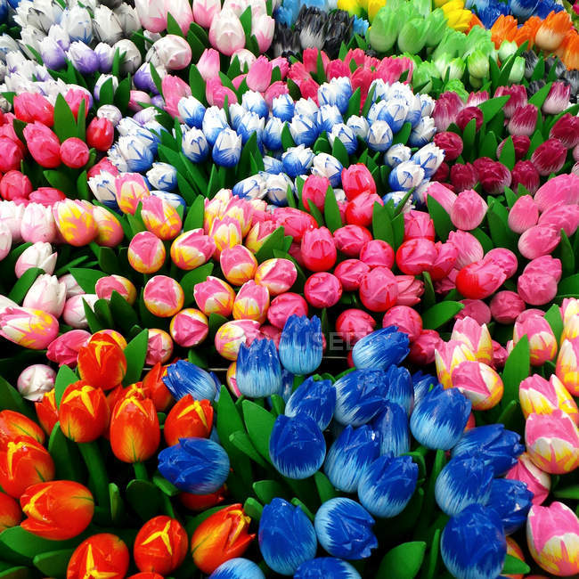 Close-up of blooming colorful fresh tulips — Stock Photo