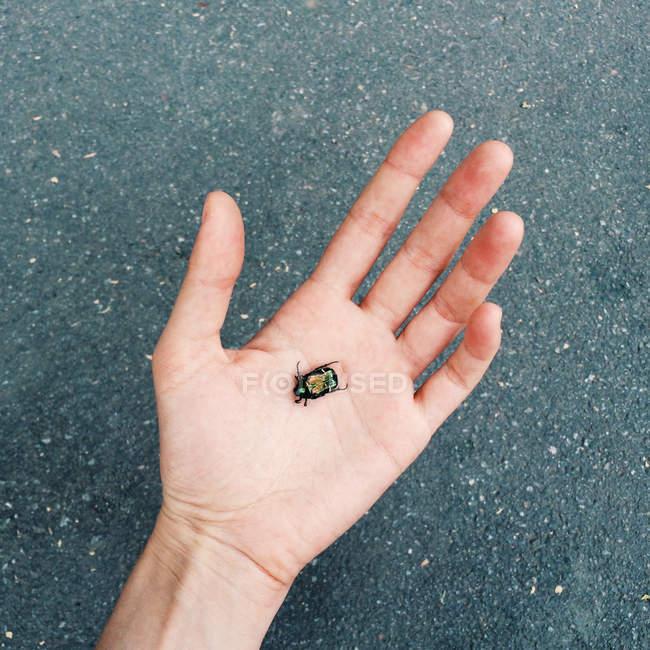 Nahaufnahme eines grünen Käfers in der Handfläche — Stockfoto