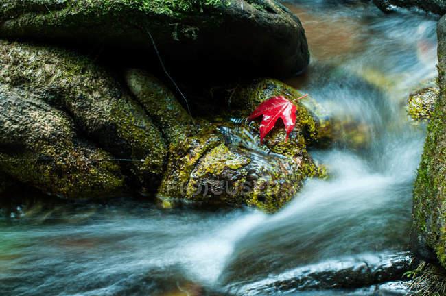 Вид крупным планом кленового листа на скалах у водопада — стоковое фото