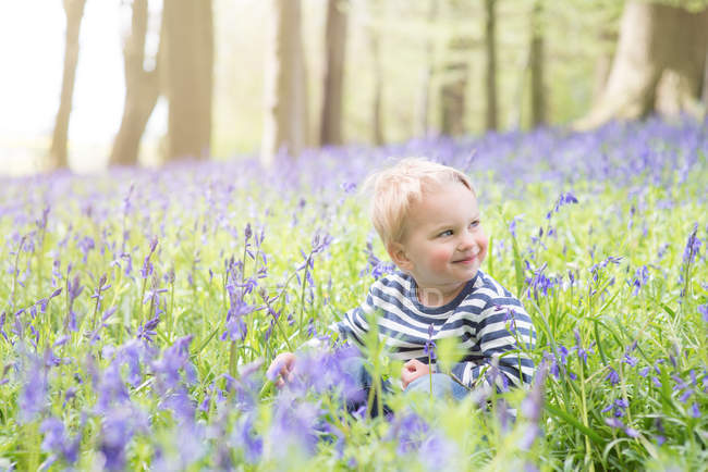Portrait of a boy sitting in bluebell forest — Stock Photo