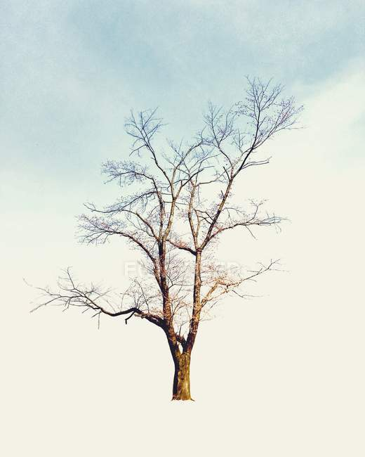 Scenic view of lone tree against sky — Stock Photo