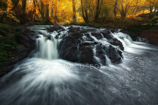 Живописный вид на реку, протекающую по скалам в лесу, Ирландия — стоковое фото