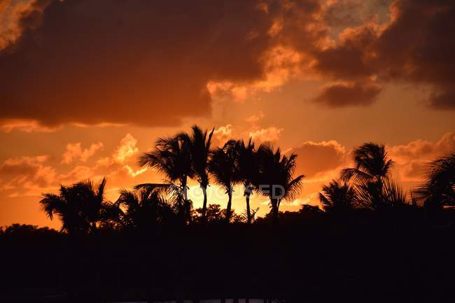 Vista panorâmica do pôr do sol e a silhueta do Palmeiras — Fotografia de Stock