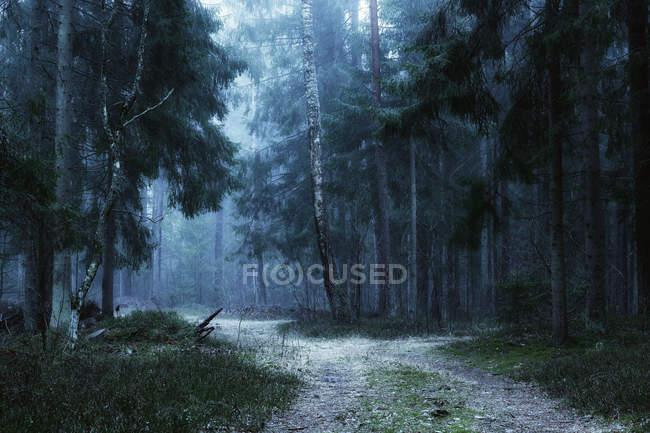 Vista panorâmica do caminho através da floresta no nevoeiro, Lituânia — Fotografia de Stock